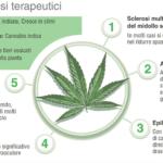 Gli atleti di sport estremi sono i casi migliori per la sperimentazione della cannabis a scopo terapeutico/medico?